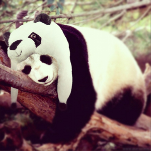 instagram_animalhats2