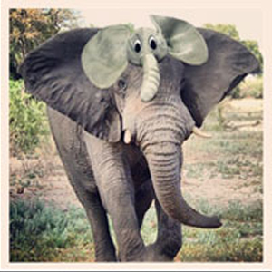 instagram_animalhats5