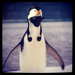 instagram_animalhats6
