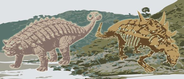 ankylosaurus wp